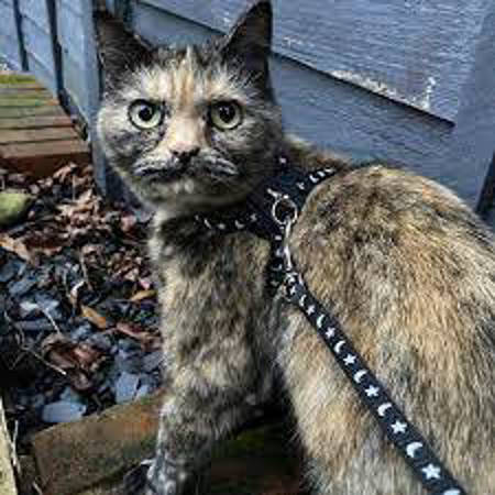 Picture for category Cat Collars and Leads