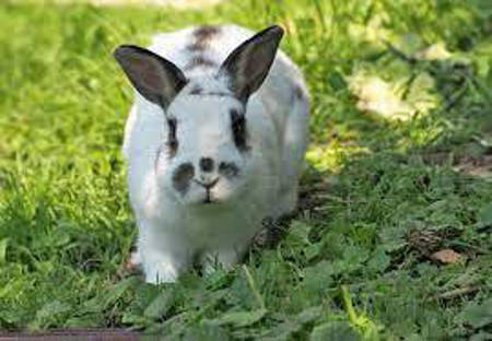 Picture for category Rabbit